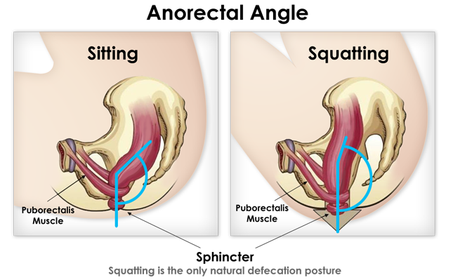 The Importance of Pooping Posture!