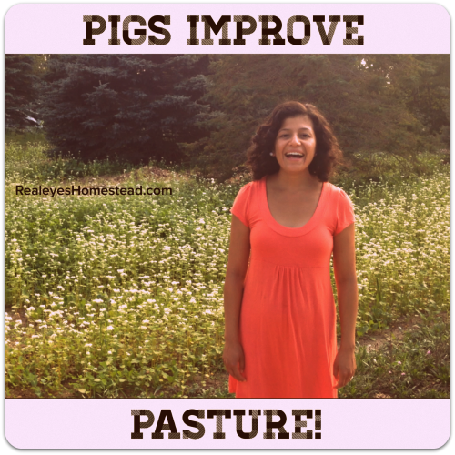 Building Soil from Scratch Using Pigs and Cover Crops!