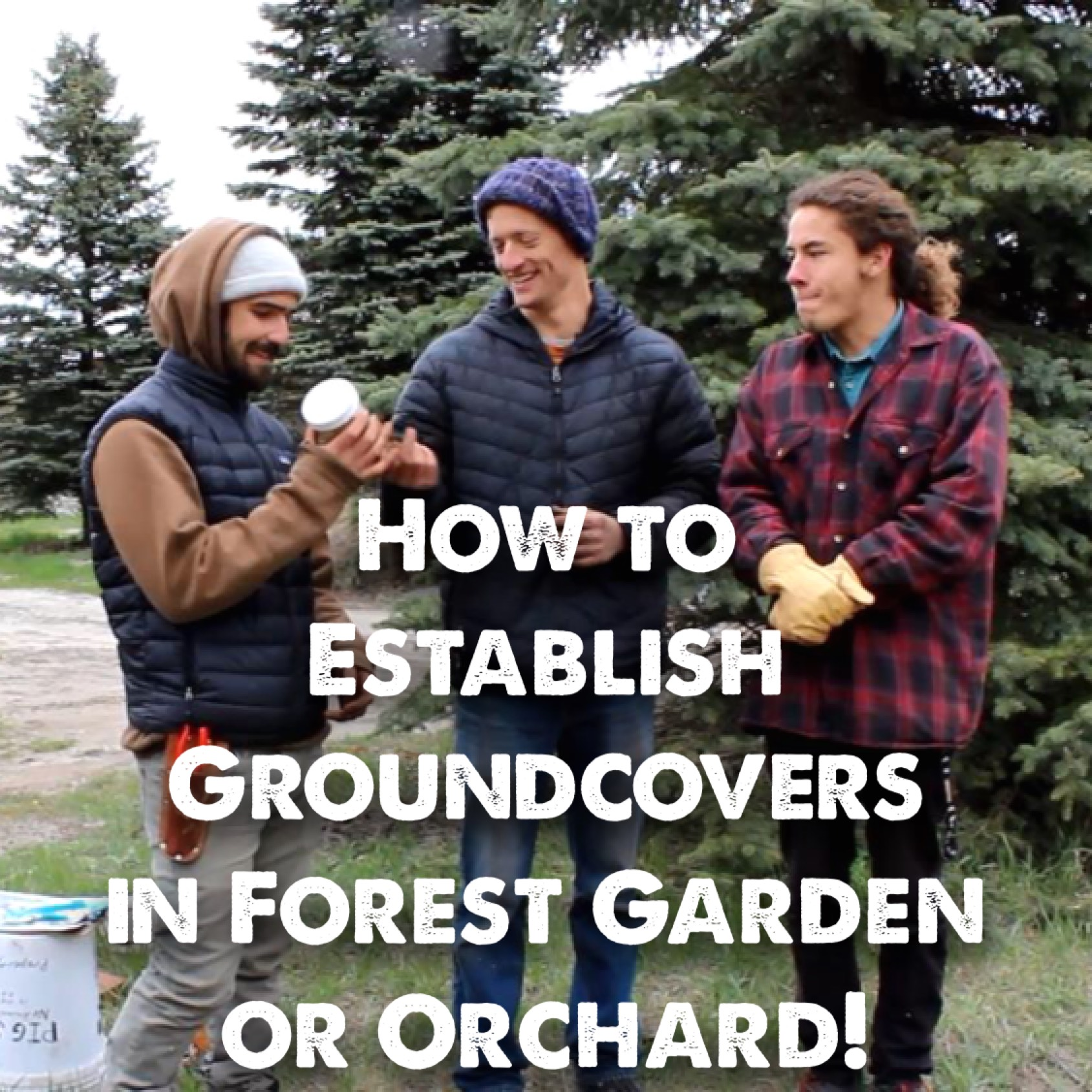 How to Establish Understory/Groundcover Plants in your Orchard or Forest Garden [Video]