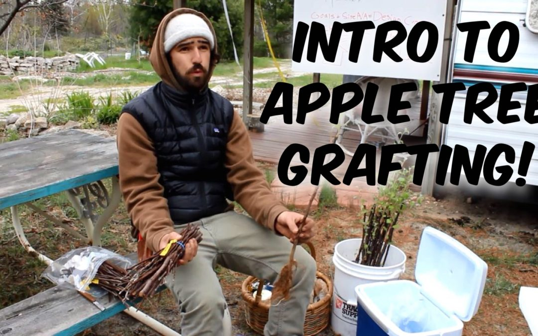 Introduction to Apple Tree Grafting with Trevor Newman [Video]